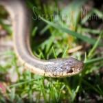 Wordless Wednesday – Spencer The Snake