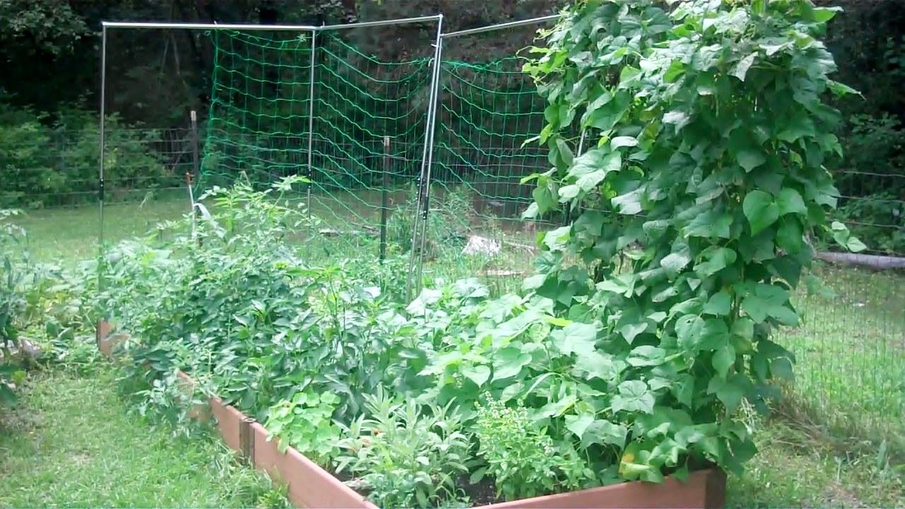 July Garden Update – VLOG