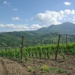 Italian Wineries of the Month